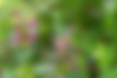 Grön blurbakgrund Royaltyfri Fotografi
