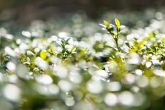 Grön bokeh Royaltyfri Foto