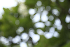 Grön bokeh för natur från träd Royaltyfri Fotografi