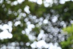 Grön bokeh för natur från träd Royaltyfria Foton
