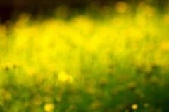 Grön bokeh från träd Fotografering för Bildbyråer