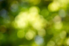 Grön bokeh från träd Arkivbild