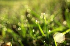 Grön bokehbakgrund royaltyfri fotografi