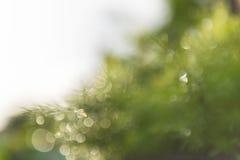 Grön bokehbakgrund Royaltyfria Foton