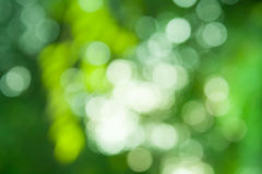 Grön bokehbakgrund från naturligt Arkivbilder