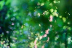 Grön bokehbakgrund med abstrakt suddig lövverk och ljust sommarsolljus Royaltyfri Foto