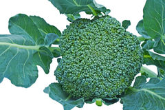 Grön broccoli royaltyfri foto