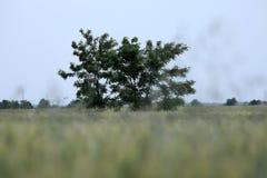 Grön buske royaltyfri foto