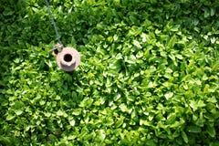 Grön buske Arkivfoton