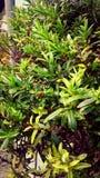 Grön buske Arkivbilder