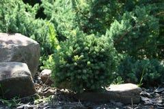 Grön buske Arkivfoto