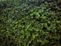 Grön buske royaltyfri fotografi