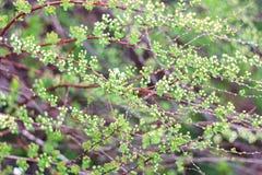 Grön buske Fotografering för Bildbyråer