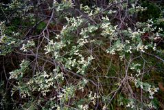 Grön buske Royaltyfria Foton