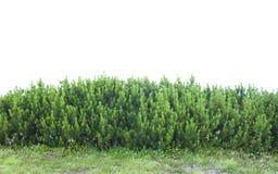 Grön buske av en, ny dekor i natur Royaltyfria Bilder
