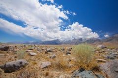 Grön buske i hög öken Fotografering för Bildbyråer