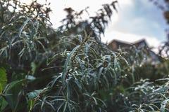 Grön buske i klara regndroppar arkivbilder