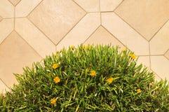 Grön buske med bakgrund för gula blommor och för keramiska tegelplattor royaltyfria foton