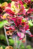 Grön buske med röda blommor Arkivfoto