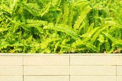 Grön buske på trämagasinet arkivfoton