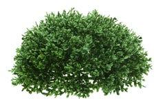 grön buske royaltyfri bild