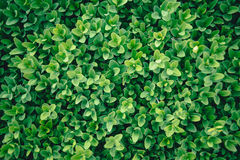 Grön buske Sömlösa Tileable Fotografering för Bildbyråer