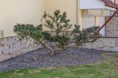 Grön buske som trädgårddekoren arkivfoton