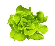 Grön Butterhead grönsallat arkivfoto