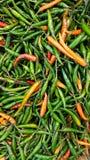 Grön chili för att laga mat Royaltyfri Foto