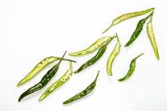 Grön chilipeppar Royaltyfri Fotografi