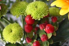 Grön chrysanthemum royaltyfri foto