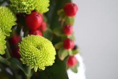 Grön chrysanthemum royaltyfri fotografi