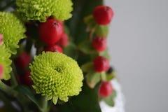 Grön chrysanthemum arkivbilder