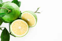 Grön citrus Arkivbild