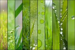 Grön collage arkivfoton