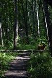 Grön dörr i den Losiny Ostrov nationalparken fotografering för bildbyråer