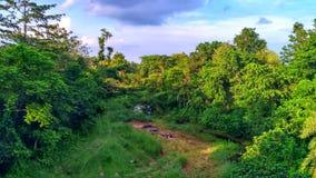 grön dal fotografering för bildbyråer