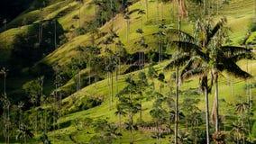 Grön dal med den högväxta palmträdet som är främst av Valle Arkivfoto