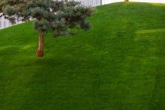 Grön dekorativ trädgård Neutralt landskap med ett grönt fält Träd för landskap Park royaltyfri foto