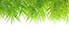 Grön design för bambubladgräns Arkivfoto