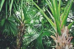 grön djungel Royaltyfria Bilder
