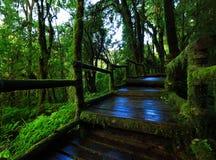 grön djungel Fotografering för Bildbyråer
