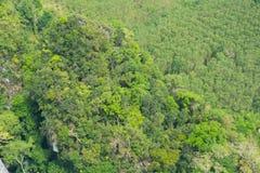 grön djungel Arkivfoto