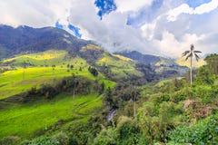 Grön djungel i berg Royaltyfri Foto