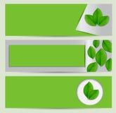 Grön ecobaneruppsättning med sidor Royaltyfri Foto