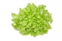 Grön ekbladgrönsallat på vit bakgrund Arkivfoto