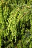 grön en för filial Royaltyfria Foton