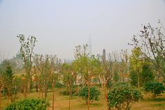 Grön expoträdgård i Zhengzhou Arkivbilder