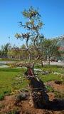 Grön expoträdgård i Zhengzhou Royaltyfri Fotografi