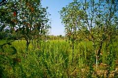 Grön expoträdgård i Zhengzhou Arkivfoto